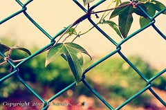 Happy Fence Friday ( Nana) Tags: life light fence colorful taiwan  simple hff taiwan happyfencefriday