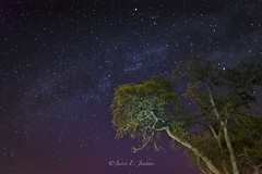 nocturnal redux (j-dub1980(THANK YOU FOR 100k+ Views)) Tags: california longexposure nightphotography morning trees stars photography dawn astrophotography astronomy nightsky constellations lightroom milkyway wideang