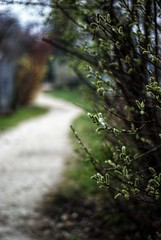 Spring Path  95-365 #4 (Samyra Serin) Tags: france 50mm europe feather gimp potd bloom bud drago day95 valdemarne aphotoaday project365 maisonsalfort 2013 fattal qtpfsgui samyras pentaxasmc50mmf17 k200d mantiuk06 shuttercal reinhard05 day1191 luminancehdr mantiuk08 samyraserin samyra008 promenadepaulczanne