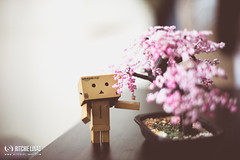 Day Ninety Eight of Three Sixty Five (Dodzki) Tags: 50mm nikon 365 danbo d600 14g april2013