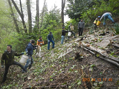 Sending the mulch up the hill (Holy Outlaw) Tags: seattle community parks restoration urbanforest nativeplants workparties earthcorps seattleparks northbeachpark urbanrestoration friendsofnorthbeachpark