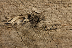 Holz Sgerau - Rogh Cut (gripspix (OFF)) Tags: wood plant texture nature cut natur pflanze rough holz rau textur sgerau 20130414