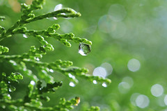 Raindrop Bokeh....Thanks (Explored) No. 5 (Jak 45) Tags: friendlychallenges