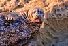 Loving Life at La Jolla (mojo2u) Tags: california sandiego lajolla seal nikond700 nikon28300mm