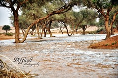 (abdulaziz al-tamimi) Tags: photography photo nikon    photograpic  nikond90   flickrandroidapp:filter=none