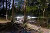 Cathedral Woods (JMichaelSullivan) Tags: night 100v woods nikon maine 600v dxo 200v nocturne monhegan 500v d800 700v 300v mjsfoto1956 400v 2013 cathedralwoods opticspro