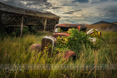 Abandoned Farm - explored (betty wiley) Tags: truck abandoned palouse washington automobile bettywileyphotography hdr country farm antique overgrown shed barn
