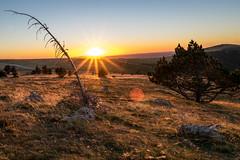 coucher de soleil (guillaume.auverchain) Tags: nikon d3300 24mm f18 herbe sche jaune soleil coucher flare mort sapin rocher contraste aigoual arbre