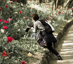 alla ricerca della macro perfetta (searching for the perfect macro!) (paolotrapella) Tags: macro fiori garden giardini fotografo tulips tulipani