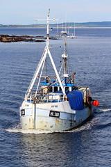 Ivy May (calzer) Tags: ivy may hull buckie fishing boat trawler catch prawns