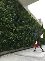 Living Wall and Sculpture (tiny red warrior) Tags: sfmoma sanfranciscomuseumofmodernart museum art sanfrancisco