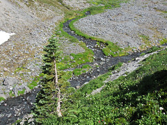 Paradise Skyline Trail at Mt. Rainier NP in WA (Landscapes in The West) Tags: mtrainiernationalpark washington pacificnorthwest skylinetrail paradise