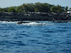 DSCN2023 (Frank and Myra Fan) Tags: bigisland hawaii monkseal