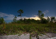 Full Moon Diamondback (Nick Scobel) Tags: eastern diamondback rattlesnake rattler crotalus adamanteus florida everglades