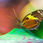 Butterfly and Colors ( 蝴蝶与色彩 ) thumbnail