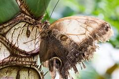 K46A7986 (Yvonne23021984) Tags: schmetterling butterfly hamm germany deutschland maxipark markro photography macrophotography canon canonphotography markofotografy canoneos7dmarkii insects insekten nature naturfotografie naturephotography closeup colorkey schmetterlinge butterflies