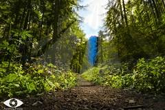 Andalo- Malga Spora (Andrea Pozza) Tags: mountain sun happy wood tree green summer canon sentiero cold m3 canoneosm3 magic
