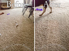 37 Carpet patch dog pet damage in living room Austin Round Rock Cedar Park Manor Bee Cave San Marcos (Carpet Repair) Tags: austincarpetrepair cedarparkcarpetrepair roundrockcarpetrepair pflugervillecarpetrepair sanmarcoscarpetrepair westlakehillscarpetrepair wimberleycarpetrepair suncitycarpetrepair driftwoodcarpetrepair georgetowncarpetrepair drippingspringscarpetrepair kylecarpetrepair laketraviscarpetrepair lakewaycarpetrepair leandercarpetrepair manorcarpetrepair onioncreekcarpetrepair bartoncreekcarpetrepair budacarpetrepair carpetrepair repaircarpeting carpetrepaircost carpetrepairservice carpetrepaircompanies professionalcarpetrepair carpetdamagerepair carpetrepairspecialist repairingcarpetdamage cancarpetberepaired canyourepaircarpet carpetrepairaustintx fixingcarpet carpetfixing fixcarpet carpetpatching patchingcarpet carpetpatch patchcarpet carpetpatches patchacarpet carpetpatchingcost carpetpatchingservice carpetrepairpatch repaircarpets carpetpatchrepair canyoupatchcarpet repairingcarpetpatch carpet patching patch patchwork repair austin kyle lakeway buda cedarpark roundrock sanmarcos beecave snag tear torn fraying frayed unraveling hole dog cat pet petdamage carpetpetdamage carpetrepairpetdamageaustin carpetrepairpetdamage petdamagecarpetrepair