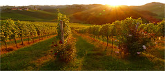 Wine and Roses... (lady_sunshine_photos) Tags: wineandroses southstyria weinundrosen südsteiermark steiermark styria at austria österreich europe europa hügelland vineyards weingärten sunset sundown sonnenuntergang mood stimmung grün gelb abendlicht abendstimmung eveningmood eveninglight warm ladysunshine ladysunshinephotos leica leicavluxtyp114 wonderfulworld supershot sonne sun landschaft landscape farbwolke theworldisbeautiful sundaylights