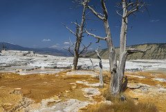 Mammoth Hot Springs (swissukue) Tags: mammothhotsprings yellowstone water landscape deadtrees