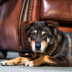 Daisy (Frozen Image Photography) Tags: dog dogs pet bestfriend loyal gsd germanshepherd