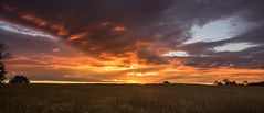 Sunday night sunset.... (Kevin Povenz Thanks for the 2,600,000 views) Tags: 2016 october kevinpovenz westmichigan michigan canon7dmarkii ottawa ottawacounty ottawacountyparks grandravinesnorth sunset evening dusk sun clouds field farmersfield panoramic pano sky sigma1020