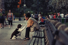 Forgiveness (FarCorner) Tags: yorkcitytrip2016usapeoplestreetdogpetcentralnyc newyork city trip 2016 usa people street dog pet centralpark manhattan forgive forgiveness owner bench punishment paw loyality trained streetphoto streetlife relashionship park woman
