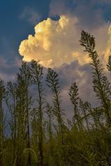 Thermal Shaft (thefisch1) Tags: storm plants vegetation interesting cumulo nimbus thunderstorm texture wind sky cloud nikon nikkor flint hills prairie oogle calendar kansas