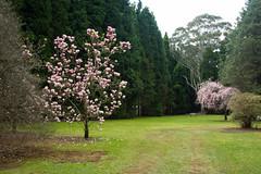 IMG_0602 (gsreejith) Tags: spring springblossom blossom flowers breenholdgardens mountwilson mtwilson nsw visitnsw