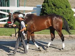 Worth the Worry (avatarsound) Tags: boston suffolkdowns horse horseracing jockey race racetrack racing