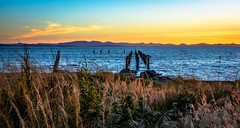 Follow my lead (c. early 1900's) (Images by Christie  Happy Clicks for) Tags: pointroberts washington usa whatcomcounty seascape beach shore pylons industry mountains sunset ocean nikon d5200 grass wildgrass