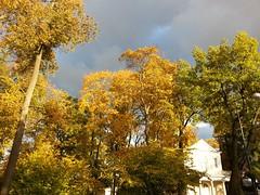 .   . Pushkin. Znamenskaya  Church. (presteza777) Tags: autumn automne autunno trees pushkin stpeterburg tsarskoyeselo church     russia