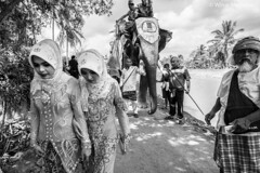 IMG_1619 (winai_madaree) Tags: elephant folk culture deep south thailand narathiwat city life melayu muslim asian asia