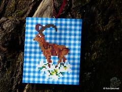 Bgelperlen Steinbock (petuniad) Tags: beads alpine chic hama perler prlplattor hamabeads strijkkralen alpinechic huettenzauber buegelperlen