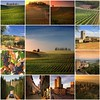 My best of Tuscany (B℮n) Tags: sunset red summer sun sunlight house holiday tree green colors leaves photo oak fdsflickrtoys topf50 cherries strada italia estate bright wine barrels mosaic great grow visit best hills collection vineyards tuscany chianti vista fields series farms cypress siena roads radda toscane region topf100 plums finest produced vino flourish discover vinyards casale bottling sangiovese cellars dello castellina hillsides harmonious 100faves 50faves sparviero