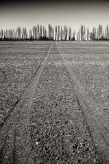 Higham Landscape II (Richard Reader (luciferscage)) Tags: trees bw monochrome field sepia landscape mono earth ridge soil land april higham richardreader fujifilmx100