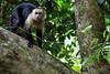 costarica2013_monkey03