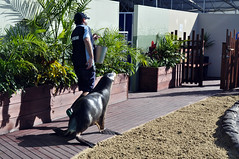 Off for a walk (Roving I) Tags: animals walking wildlife australia trainers nsw newsouthwales buckets attractions coffsharbour keepers furseals coffscoast dolphinmarinemagic