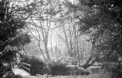 Arcadia (case-ie) Tags: park trees sunlight film forest blackwhite spring olympus 400 xa rodinal fomapan unalterednegativescan