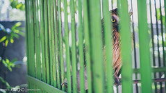 093 (Bo Ismono) Tags: travel bali bird eye animal 35mm indonesia fuji evil angry owl xe1 vsco