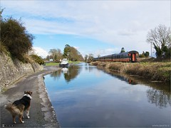 Into the Distance (bbusschots) Tags: ireland dog animal train canal rail maynooth pathway kildare steamloco rpsi no186 topazadjust