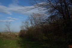 ........ (Ž.M) Tags: nature priroda prolece zeleno plavo proleće vigilantphotographersunite