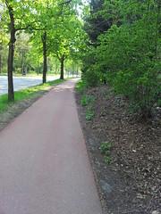 20130505_173804 (MelisaTG) Tags: cameraphone trees woods urbanwoods greenleafs