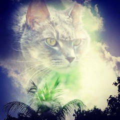 In memory of our #Bandit #kitty (Meliroe) Tags: kitty bandit uploaded:by=flickrmobile flickriosapp:filter=nofilter