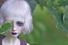 Leaf (hadhoo) Tags: bjd gumj dollmore zaoll luv