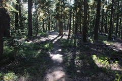 Trail and forest and late afternoon (rozoneill) Tags: maiden peak trail waldo lake pacific crest oregon hiking willamette pass gold skyline odell butte volcano forest eugene