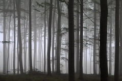 2016-07-03 Foggy Forest (beranekp) Tags: czech forest wald les tree baum foggy fog nebel nature