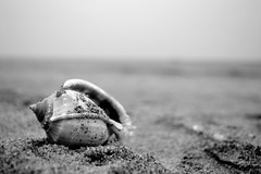 Shell (Nyshnt) Tags: blackwhite beach sand