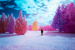 Mood of an Enchanted Forest (jrseikaly) Tags: montral qubec canada ca infrared park parc maisonneuve sky jack seikaly multicolor ir color colorful nature montreal botanical gardens outdoor plant tree trees bright portrait photoshop