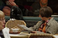 Portrait (Natali Antonovich) Tags: portrait mokafe terras cafe sweetbrussels brussels lifestyle tradition reading read cat animal belgium belgique belgie sthubertgallery relaxation newspaper newspaperreader